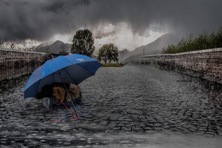 ouragan irma et animaux