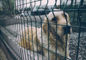 Maltraitance animale : que faire si je suis témoin ?