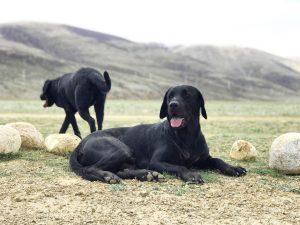 EN IMAGES: 10 races de chiens réputées comme étant fugueuses
