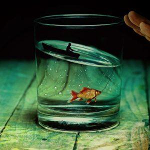 Belgique : louer un poisson rouge dans sa chambre d'hôtel
