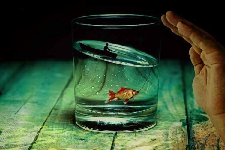 poisson rouge à louer dans un hôtel