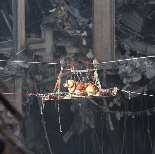 les chiens héros du 11 septembre