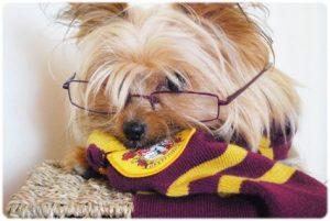 À quelle maison de Poudlard appartient votre chien ?