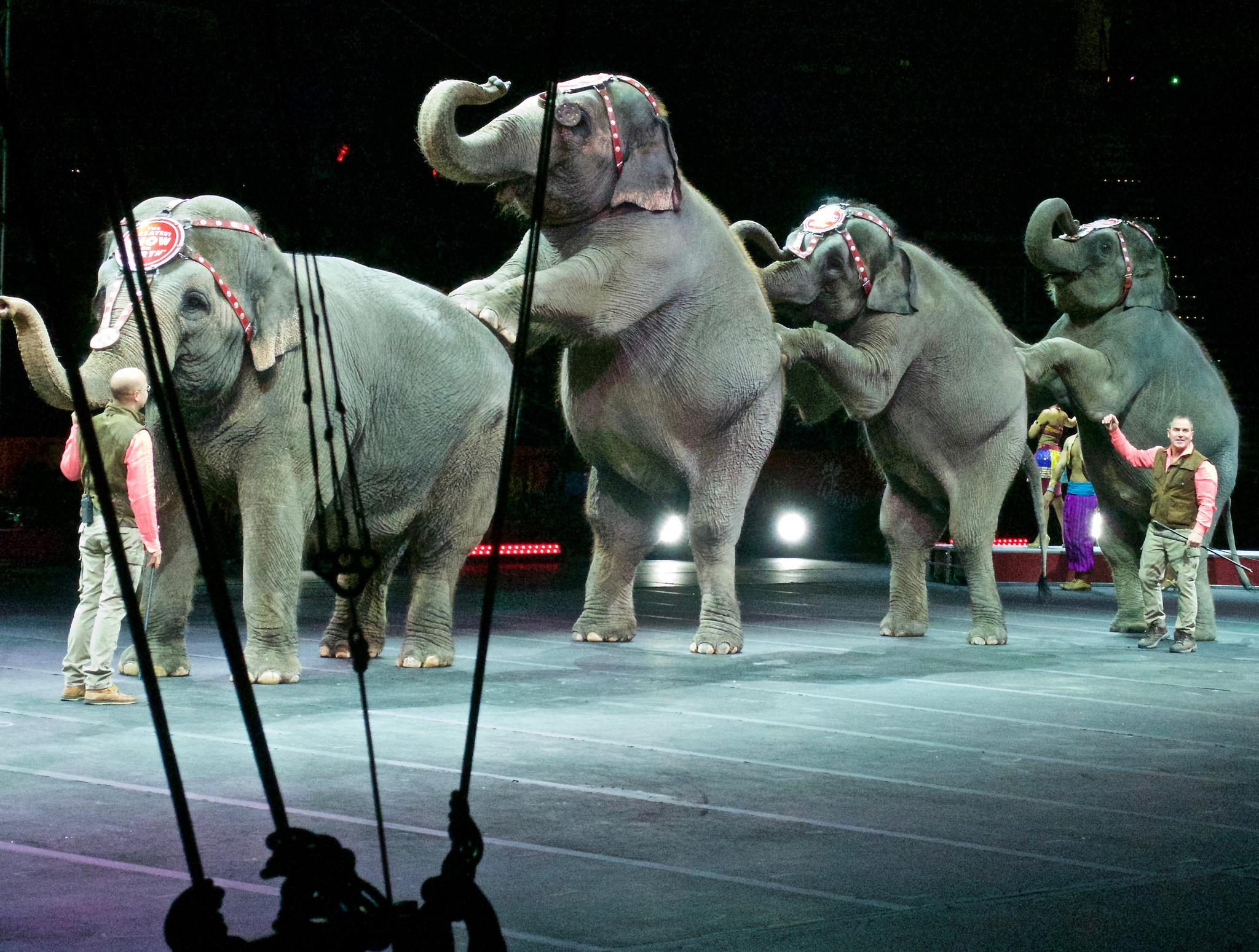 new york dit non aux cirques avec les éléphants