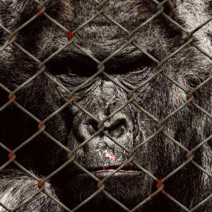 5 causes animales dans lesquelles il est possible de s'engager