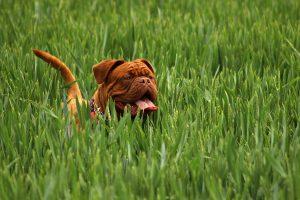 Tiques : comment les enlever sur son chat ou sur son chien ?