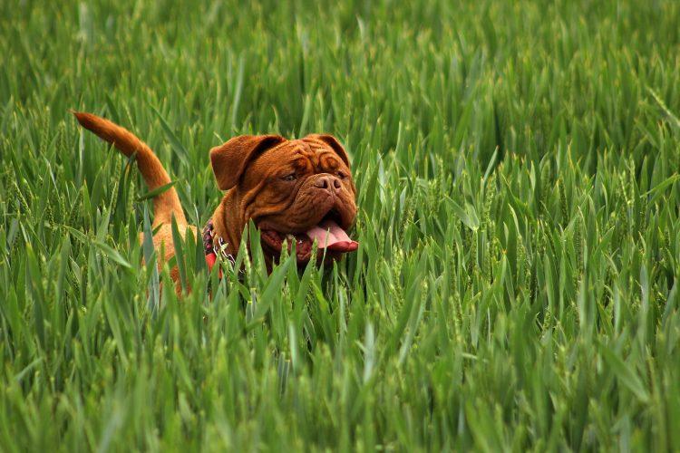comment enlever les tiques sur son chien