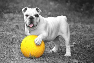QUIZZ : Si vous étiez un chien, quelle race seriez-vous ?