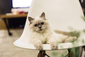 Quel type de litière choisir pour son chat?