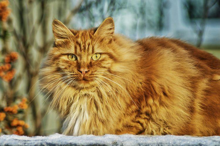 différentes brosses pour chat
