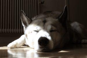 7 idées pour occuper votre chien quand vous n'êtes pas à la maison
