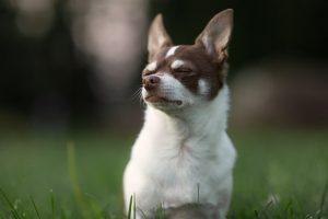 4 vaccins qu'il est important de faire à son chien