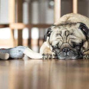 3 choses à savoir pour comprendre le sommeil de son chien