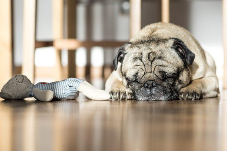 le sommeil des chiens