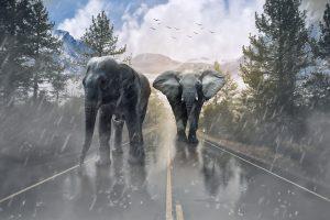 Gulli arrête la diffusion de spectacles avec des animaux sauvages
