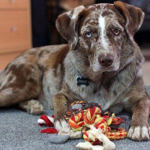 4 idées d'activités en intérieur pour jouer avec son chien