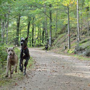 5 conseils pour préparer son chien à l'arrivée d'un deuxième toutou à la maison