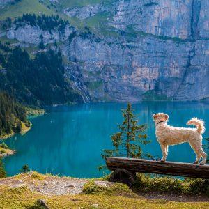 5 choses à savoir avant d'emmener votre chien en randonnée