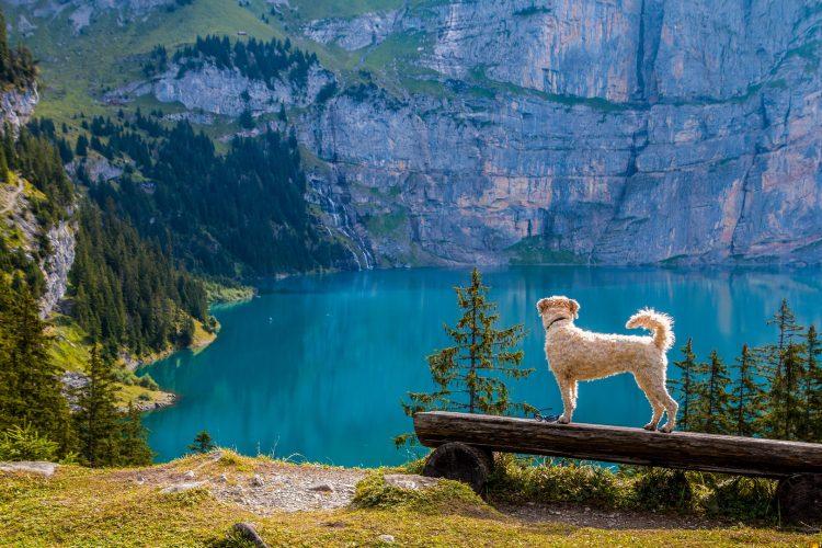 choses à savoir avant d'emmener son chien en randonnée