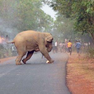 Wildlife Photography : le prix revient à cette photo qui désigne une triste réalité