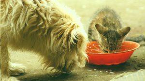 L'alimentation – par le chat malin, mais pas radin!