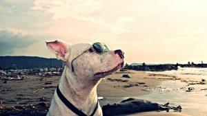 Ce qu'il faut savoir sur les chiens catégorisés