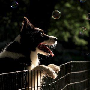 Les 7 commandements pour rendre son chien heureux