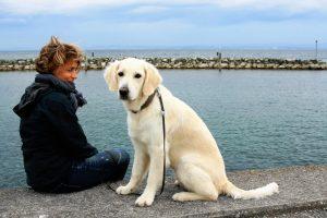 ETUDE : une plus forte empathie pour les chiens que pour les hommes