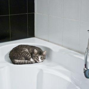 Comment faire pour bien laver son chat?
