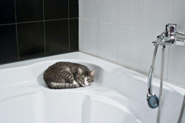 comment faire pour laver son chat