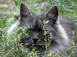 10 signes qui peuvent vous aider à savoir si votre chat a mal