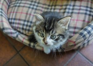 Le matériel – par le chat malin, mais pas radin!
