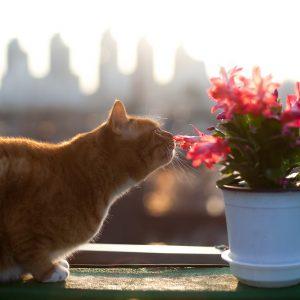 Le « quart d'heure de folie » du chat, ça existe vraiment ?