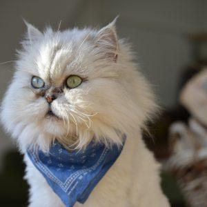 Comment éviter l'ennui chez le chat?