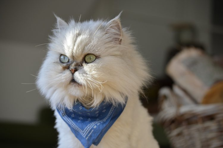 comment lutter contre l'ennui chez le chat