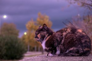 6 conseils pour se préparer correctement à la vieillesse de son chat