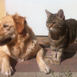 Chien et chat: l'importance des traitements antiparasitaires