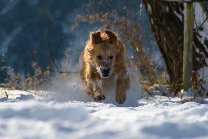 8 choses à connaître pour protéger son chien du froid
