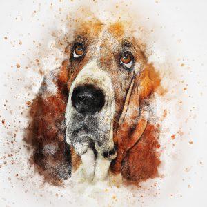 Petit aperçu de l'histoire de la domestication du chien