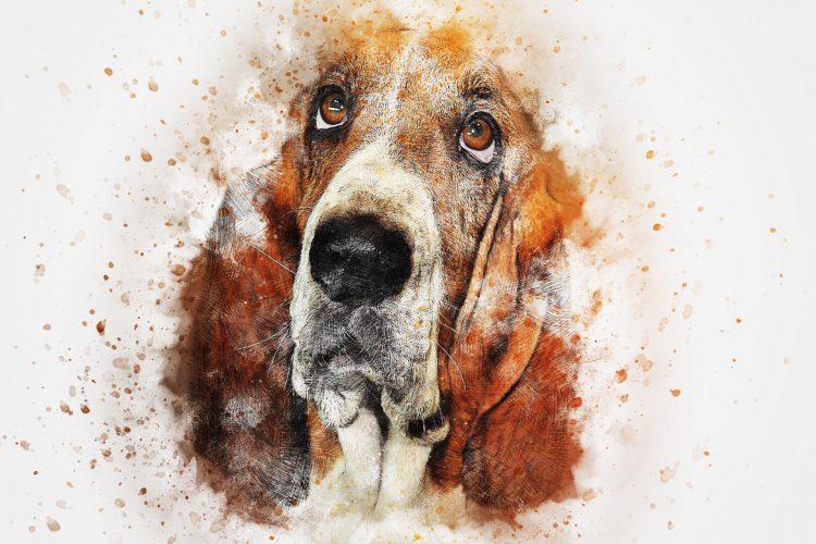 petite histoire de la domestication du chien