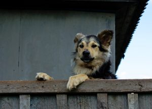 Comment faire quand mon chien a peur des invités?