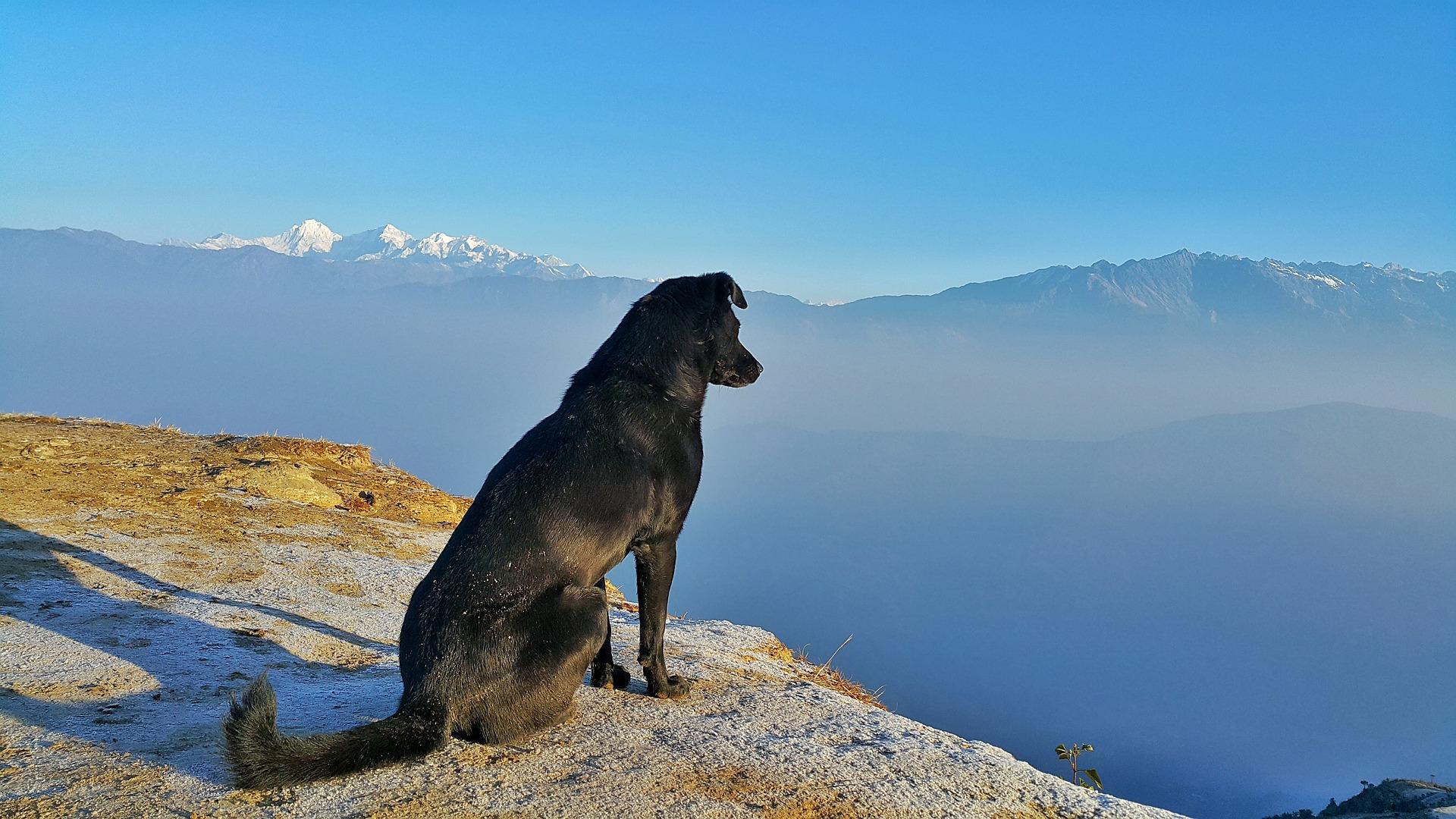 Comment savoir si son chien manque d'exercice ? - Sans