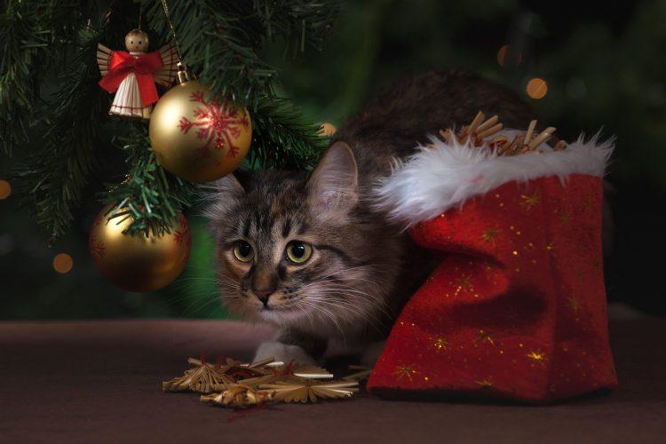 chat et sapin de noël