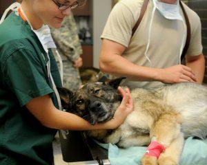 5 métiers en lien avec la santé des animaux