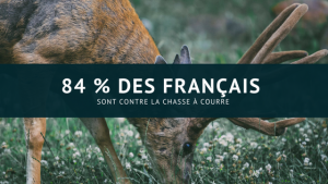 La grande majorité des Français opposée à la chasse à courre