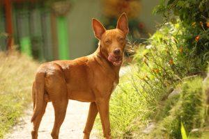 Stop abandon : comportements indésirables courants chez le chien mâle