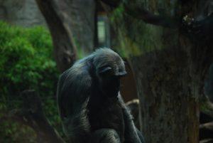 Shutterstock: la banque d'images qui bannit les photos de singes hors de leur milieu naturel