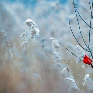 Hiver : comment faire pour aider les oiseaux à se nourrir ?
