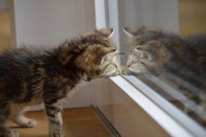 Est-ce que les animaux peuvent se reconnaître dans un miroir ?