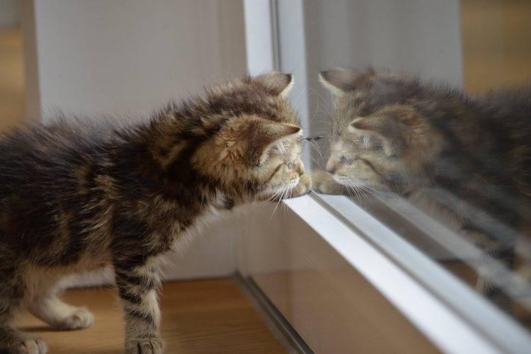 est-ce que les animaux peuvent se voir dans un miroir